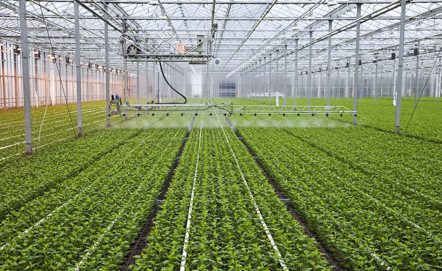 The interior of a large greenhouse.