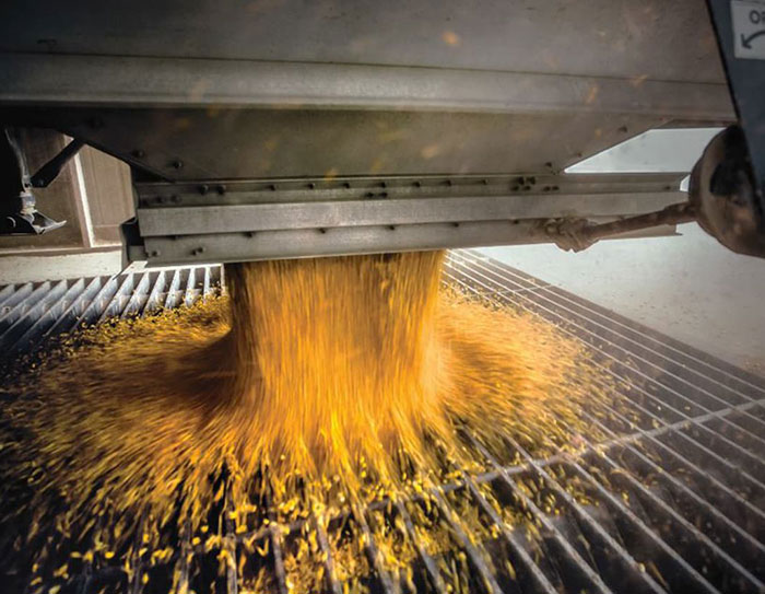 Corn pours from vent.
